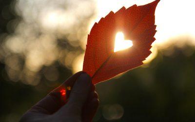 Cadeau van de natuur 'Vanuit je hart leven'